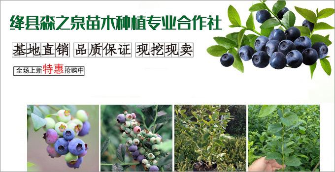 绛县森之泉苗木种植专业合作社